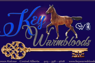 Thumbnail for the post titled: Key Warmbloods